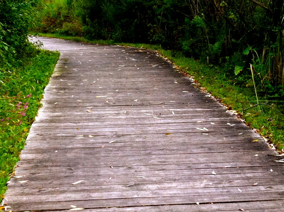 A color photo of a wooden path