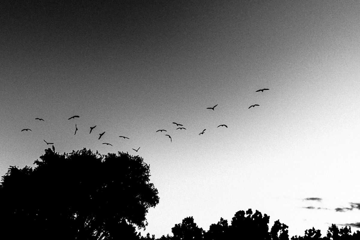 Birds leave trees. Shot with a Canon 60D by Jay Sennett
