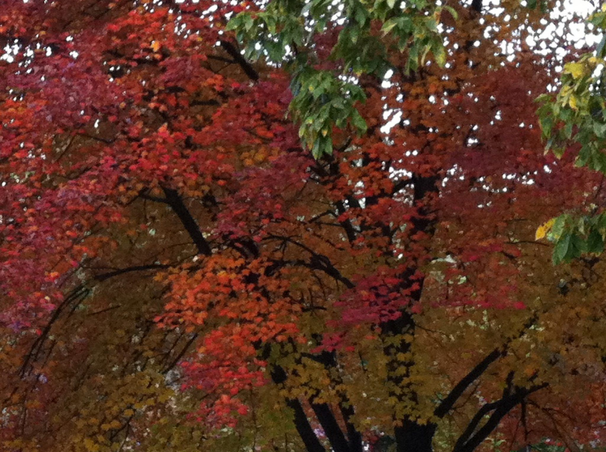 color photo of autumn trees